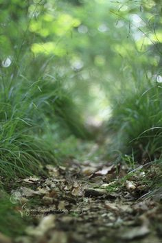 forest floor -inspiration, print on transparency, diminishing text along center line