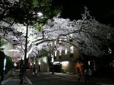 春ー六本木の桜