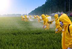 pesticide-spraying-tea, best tea