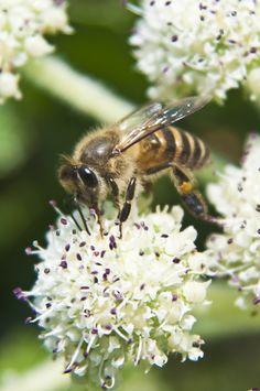 Hard Workin' Honey Bee