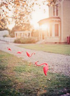 i like pink flamingos!