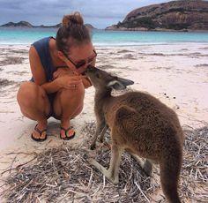 True loves kiss  #luckybay #esperance #kangarookiss #exploretheworld #traveljunkie #365studentnomad #traveltheworld #blueocean #whitebeach #studyabroad #australianlife #iloveaustralia #studentenleben #strayalove by jennice_heaven