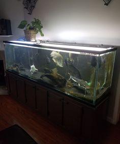 200 gallon Fish Tank, Aquarium with Stand and lid with led lighting. 200 Gallon Fish Tank, Led Aquarium Lighting, Aquariums, Ebay, Tanked Aquariums, Fish Tanks, Fish Tank