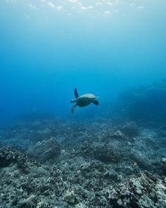 2,452 отметок «Нравится», 8 комментариев — @uheheu в Instagram: «happy world turtle day! @fairwindcruises took us south to some reefs we never explored before. huge…»