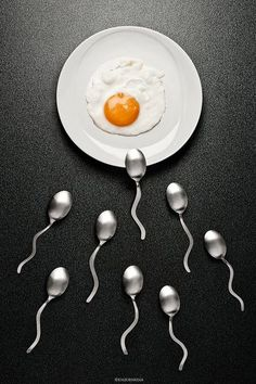 Eggs & sperms