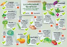 Consociazioni nell'orto: piante che si amano ❤ - Il Blog di Bio Aksxter Design Jardin, Garden Design, Green Garden, Garden Plants, Lisa Green, Vegetable Garden Planner, In Natura, Green Kitchen, Plantation