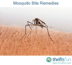 Stopping the itch and irritation of mosquito bites isn't always easy. This guide contains mosquito bite remedies.