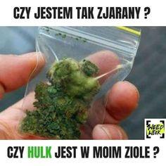 #Ziarany #Hulk #Memy #Śmieszne Funny Videos, Tango, Hulk, Herbs, Projects, Stuff Stuff, Log Projects, Blue Prints, Herb