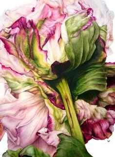 Peony in watercolour by Marie Burke.