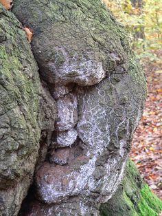 tree face - Alan Biggins Photography - Location Gallery