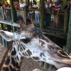 Brevard County Zoo, Melbourne FL