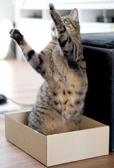 Viele schnelle, einfache und tolle Ideen mit seinen Katzen zu spielen und sie gut zu beschäftigen.