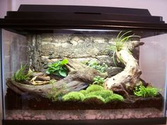 Vivariums are tanks that contain live plants and animals. They are very beautiful, and surprisingly simple to make. Below are the steps needed to construct a naturalistic vivarium. Such a vivarium could be used for poison dart frogs, mantellas,...