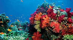 Australia the Great Barrier Reef to Sydney -   Cairns, Alice Springs, Ayers Rock, Melbourne, Sydney