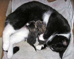 Karina's Kittens: Dobby [4]  kitten