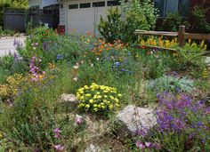 Advice for a New Native Gardener - California Native Plant Society California Native Landscape, California Backyard, California California, Northern California, Drought Tolerant Landscape, Xeriscaping, Backyard Garden Design, Yard Design, Landscape Plans