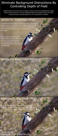 You can reduce or eliminate distractions by controlling depth of field. Depth of field is how much is in focus in front of and behind the subject you have focused on. The main thing that determines depth of field is the value that you have set your cameras aperture to. It is measured in f-numbers. #wildlifephotograpy #photography