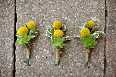 The men will wear boutonnieres of green succulents with yellow billy balls and green lemon leaves wrapped in raffia with the stems showing