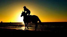 Kollagén 500ml - RAMISSIO Horse Photos, Horse Pictures, Horse Magazine, Dubai World, Horse Face, Thoroughbred Horse, Nature Water, Horse Breeds, Show Horses