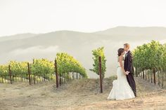 There's nothing like a romantic stroll among Holman's vineyards.