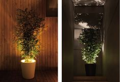 indoor plant accent light - Google Search
