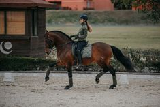 Dressage runs through my blood #equestrian #equestrianstockholm #horse #horses #equestrianperformance