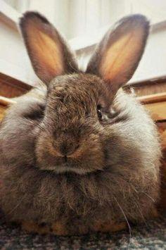 Puffy bunny : )