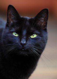 Black cat Molly, Black Magic Molly