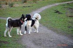 Shadow en vriendje