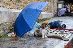 Apprenez la Streetphotography dans nos cours à Paris - Grainedephotographe.com