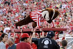 Bucky Badger doing pushups at the 2012 Rose Bowl football game...I love Bucky!
