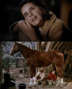 national velvet - My favorite when I was a kid - that and 'Flipper'!  cm