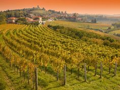 The Goriška Brda region and its idyllic countryside of rolling hills, endless vineyards, ancient traditions and timeless villages.