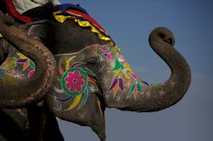 Not sure how I feel about doing this to elephants, but I can't deny it is beautiful.