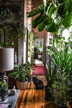 Photo 5 of 12 in 11 Lush, Plant-Filled Dwellings That Pay Homage to Home Horticulture from Designer Hilton Carter's Bodacious Baltimore Pad Teems With Over 300 Plants - Dwell Room With Plants, House Plants Decor, Plant Decor, Indoor Garden, Indoor Plants, Home And Garden, Garden Planters, Plant Aesthetic, Aesthetic Rooms