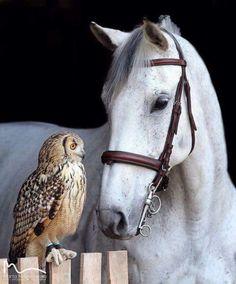 crescentmoon animalia Most Beautiful Horses, All The Pretty Horses, Beautiful Birds, Animals Beautiful, Nature Animals, Animals And Pets, Cute Animals, Horse Pictures, Cute Animal Pictures