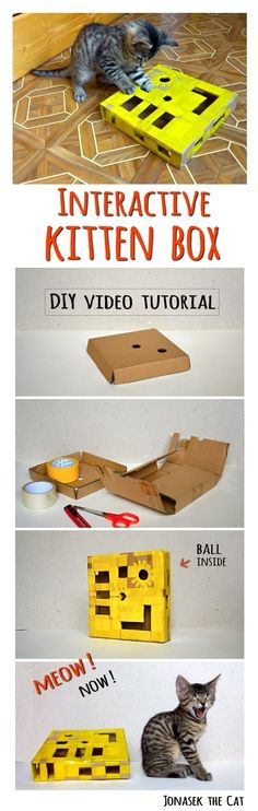Interactive kitten cat puzzle BOX - DIY tutorial