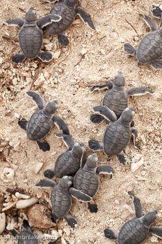 Turtle Islands, Tawi-Tawi | Turtle Islands National Park - Turtle Islands, Sulu Sea, Malaysia