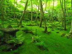 京都祉王寺「緑和む庭」by teraoka