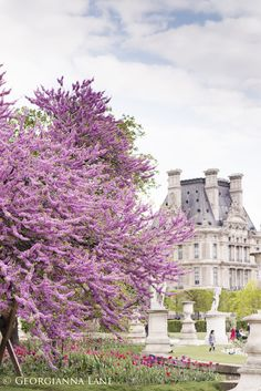 Blossoms in The Tuilieries, Paris, France Tuileries Paris, Jardin Des Tuileries, Paris In Spring, Springtime In Paris, Beautiful World, Beautiful Gardens, Beautiful Places, Amazing Gardens, Beautiful Landscapes