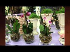 So fühlen sich Orchideen wohl - YouTube