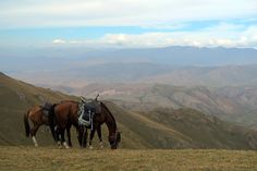 What can you expect from horse trekking to Song Kol Lake in Kyrgyzstan? Riding over mountain passes, sleeping in yurts, and traditional food and tea.