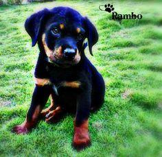 I need a new puppy ):