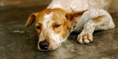 """Don't let another dog be """"accidentally"""" euthanized, forgotten for days in facility van, or strangled and dragged across the floor. (119719 signatures on petition)"""
