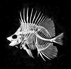 Simple Fish Skeleton Simple fish sk..
