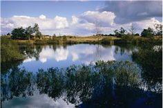 De Gasterse Duinen bestaat uit een golvend heidelandschap. Forse stuifduinen en schilderachtige vennen bepalen grotendeels het aanzicht van het terrein.