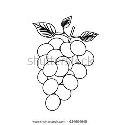 monochrome silhouette of bunch of grapes vector illustration