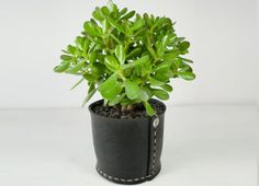 Tidy Pot made from recycled car tyres | Garden Life