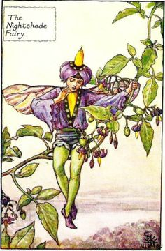This beautiful Nightshade Flower Fairy Vintage Print by Cicely Mary Barker was printed and is an original book plate from the Book of Flower Fairies. Cicely Barker created 168 flower fairy illustrations in total for her many books Cicely Mary Barker, Nightshade Flower, Flower Fairies Books, Kobold, Vintage Fairies, Beautiful Fairies, Fantasy Illustration, Fairy Art, Fantasy Art