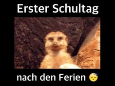 """Translation in German: """" First day of school after the holidays. """"   ( I love how the 'teacher's' voice fades away every time he stars to nod off. """" ;-D"""
